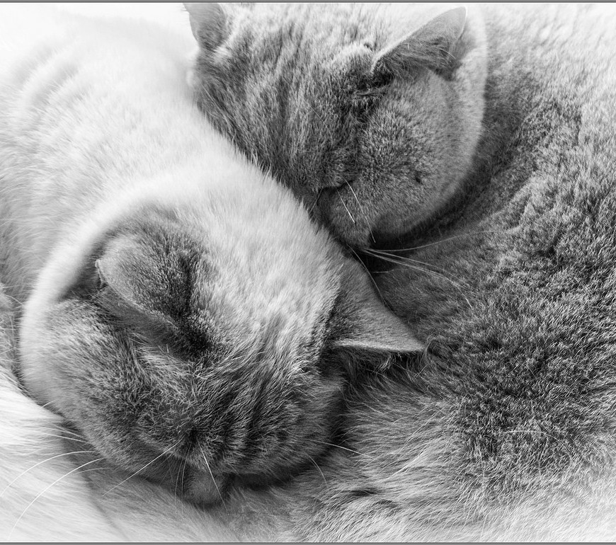 Yin & Yang close up in Monochrome Cee's Black&White Challenge