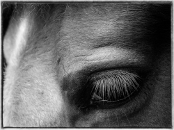 Horse's Eyeclose up in Monochrome Cee's Black&White Challenge