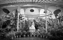 Botanic Gardens Glasgow monochrome B&W