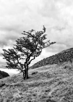 Trees 6 ©HelenBushe