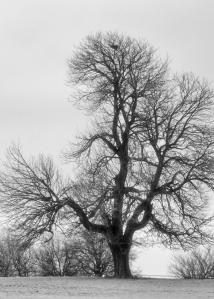 monochrome trees CB&W