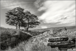 Trees 9 ©HelenBushe