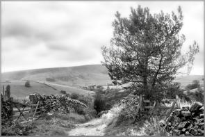 Trees 8 ©HelenBushe