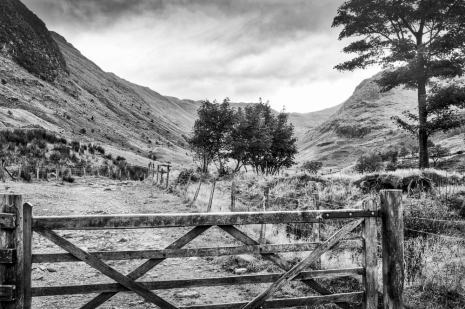 Fences and Gates ©HelenBushe