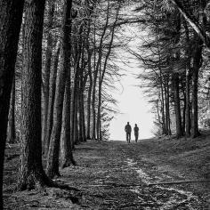 Bowland Trees ©HelenBushe