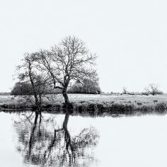Canalside Trees ©HelenBushe
