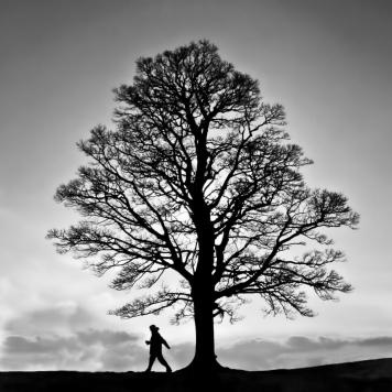 Tree Silhouette ©HelenBushe