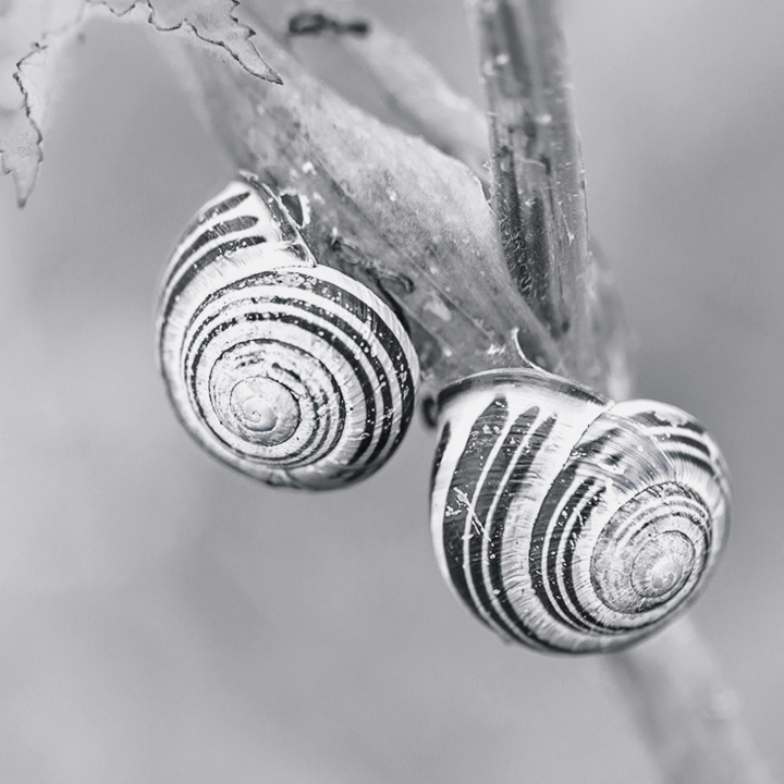 Patterns: Spirals©HelenBushe