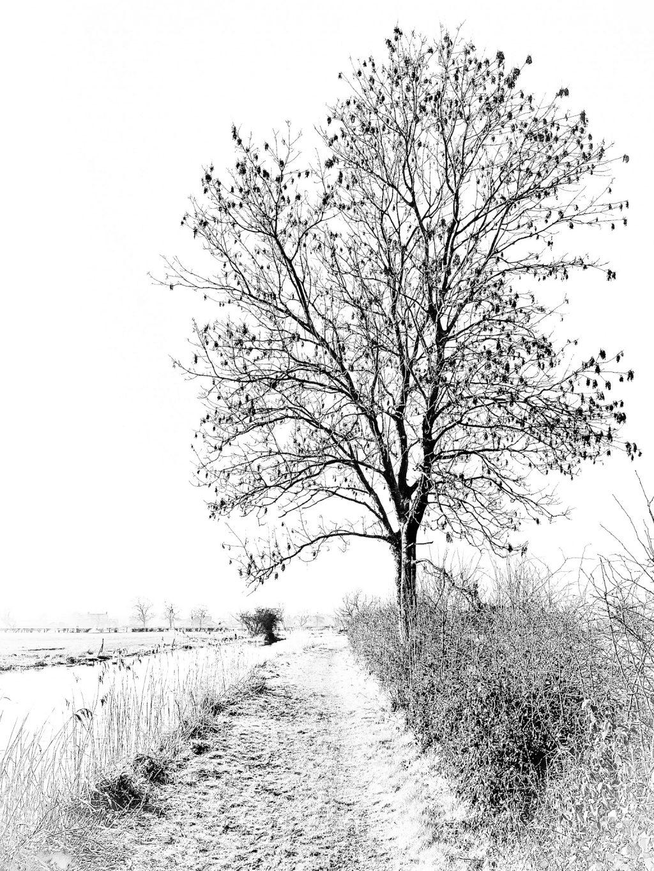 Lone Tree by Canal ©HelenBushe